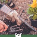 Jardinage avec outils et lante